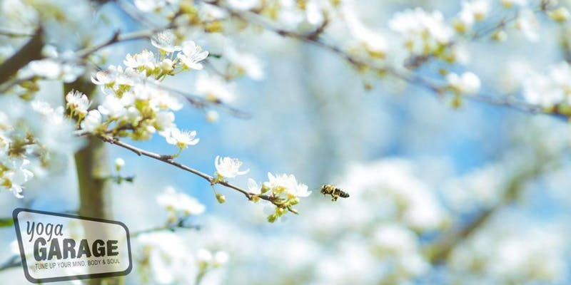 Free your Chi Spring Yin Yoga workshop